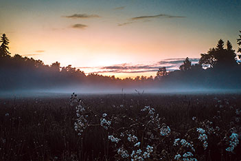 Photo shows mist floating over a summer night field.