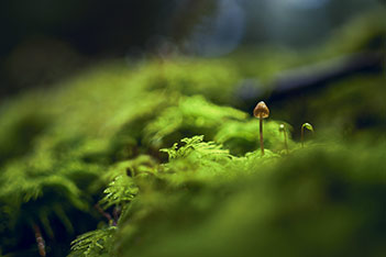 Photo shows tiny living things, which require absolutely pure nature to thrive.