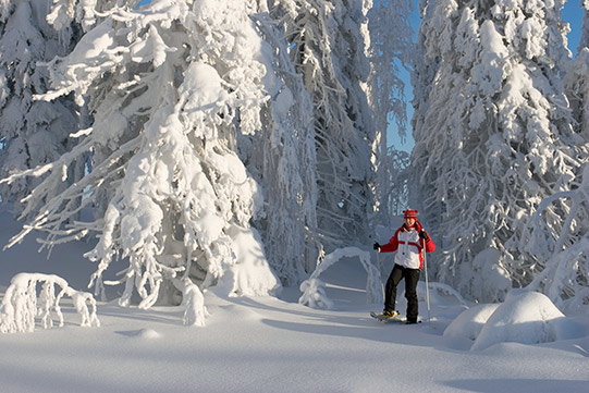 Photo shows a woman walking on snow shoes in a snowy sunny forest.